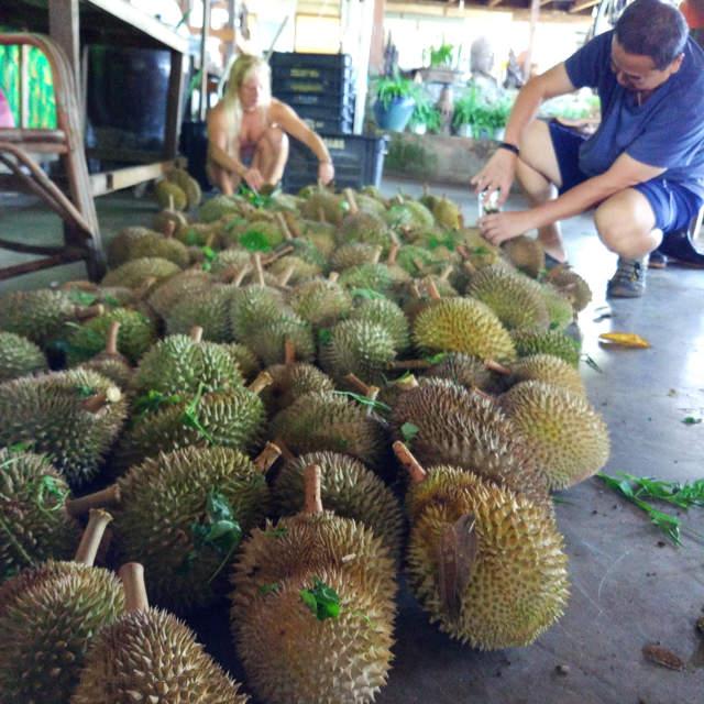 Penang Durian Buffet